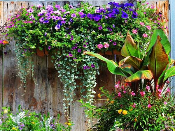 Irrigation, Water features, Nursery, Plantings, Patios, design, Scovills landscape, landscape design, landscaping, landscapes, landscape patio design